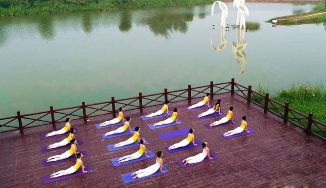 瑜伽爱好者湿地公园练习瑜伽
