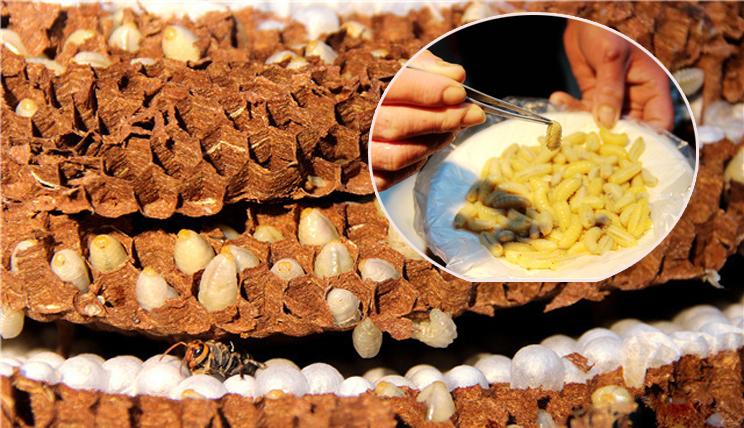 菜市场150元一斤的蜂蛹,你有吃过吗?