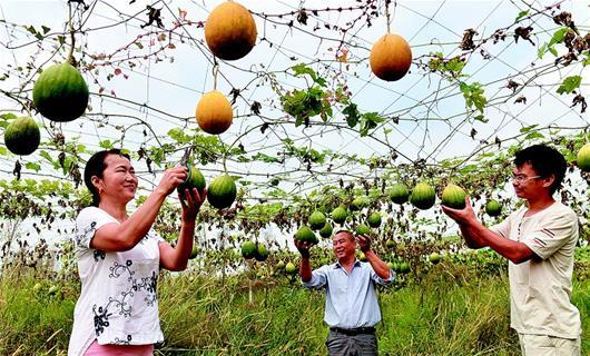 通城县大坪村 荒山创业带动周边5个村百余农户种中药材增收