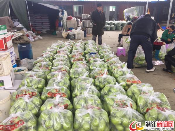 蔬菜丰收采销忙