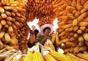 """""""中国农民丰收节""""带给我们不止是喜悦"""
