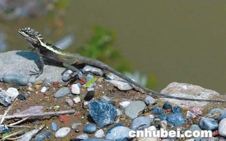 三峡大坝里面有条蛇