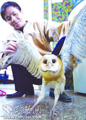 级保护动物猴面鹰