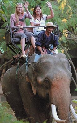 莎拉波娃和泰国网球选手塔娜苏甘坐着大象游玩