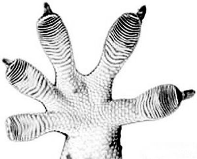 植物叶片  微观结构