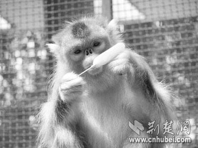 [图文]江城动物避暑图(图)