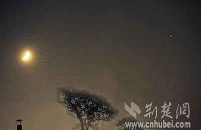 带月叶带月亮风景图片