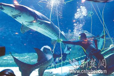 荆州海洋世界海洋馆