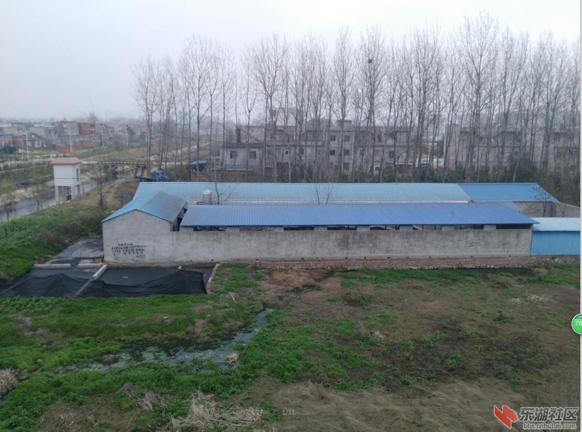 天门杨林一养猪场乱排养殖废气、废水
