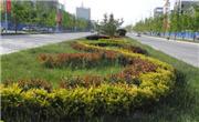 汉阳区墨水湖北路和动物园路的绿化带为何盖上了水泥?