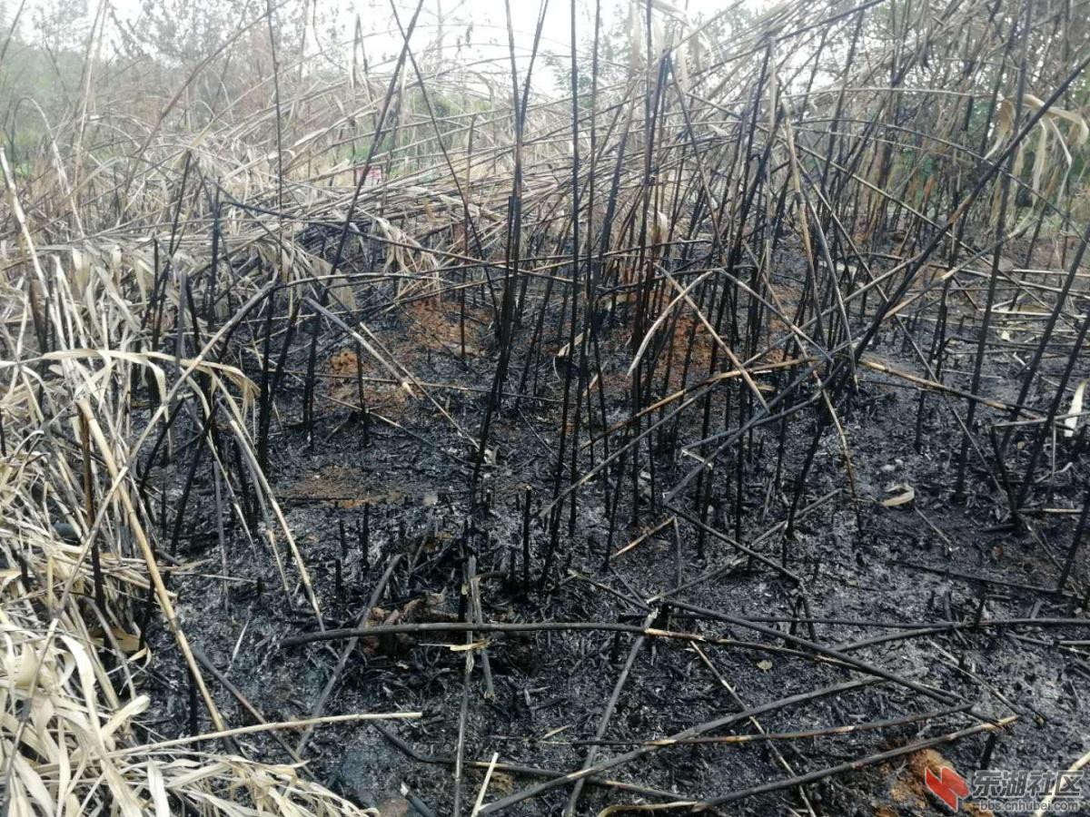 盘龙城汉口湖畔小区附近焚烧垃圾