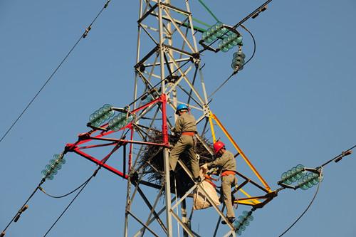 图一,二:电力工人搬迁铁塔上的鸟窝