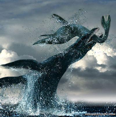 壁纸 动物 海洋动物 鲸鱼 桌面 400_403