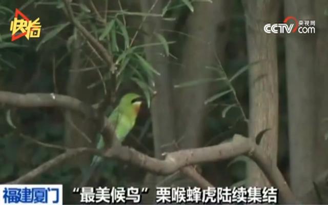 中国最美候鸟