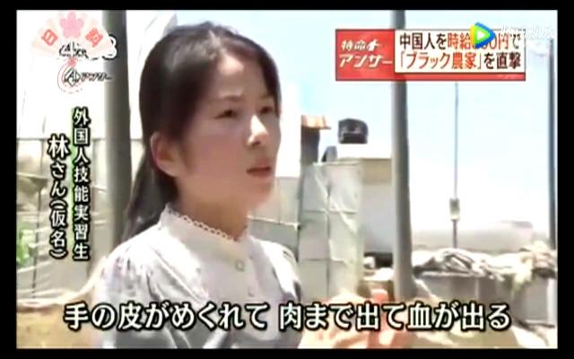 中国实习生被日本人疯狂压榨 无休止加班还要陪睡