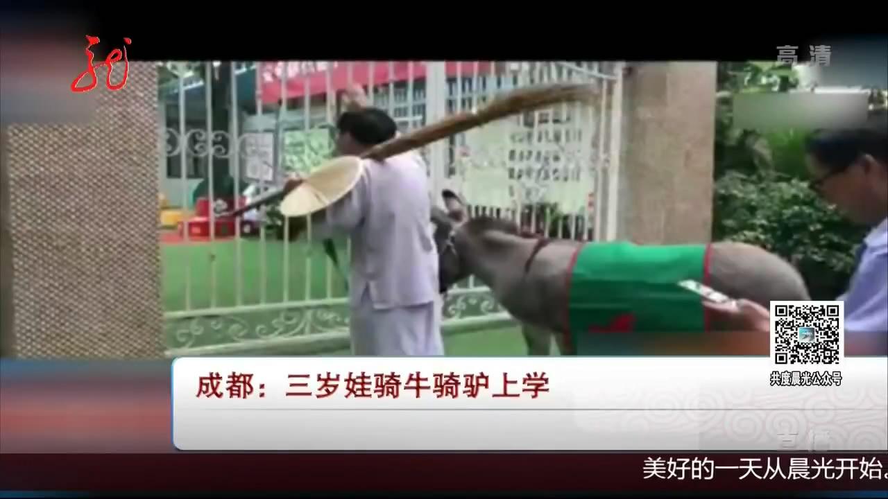 成都三岁娃骑牛骑驴上学