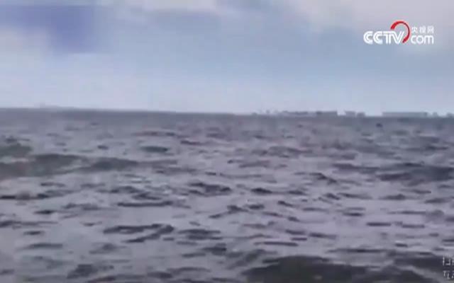 出海偶遇座头鲸 惊魂一刻