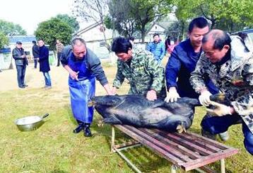 众筹下乡杀猪宰羊 在武汉越来越流行(图)