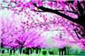 武汉春季赏花游拉开序幕 双休高温15℃+
