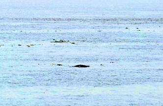 宜昌至武汉段发现102头次江豚 监测数量高于2012年