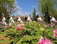 美女牡丹花间练瑜伽