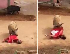 60岁老妇遭两头猪袭击