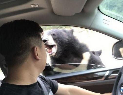 动物园猛兽伤人事件