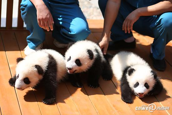 这3只熊猫名字由你定!
