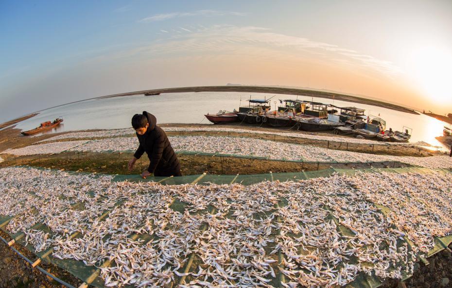 鄱阳湖渔家晒鱼干壮观