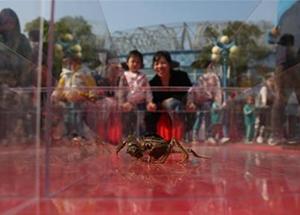 """螃蟹赛跑 """"蟹将""""争先恐后"""