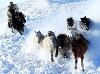 内蒙古牧民驯马踏雪扬鞭
