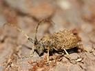 宜昌发现3种昆虫新物种
