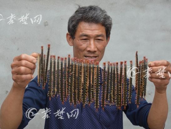十堰村民夜捉蜈蚣致富