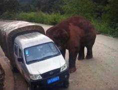 车辆遭大象袭击 撞翻桥下