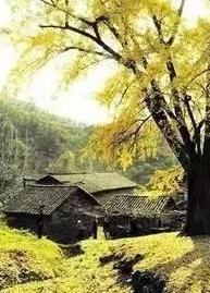湖北最具影响力十大美丽乡村出炉