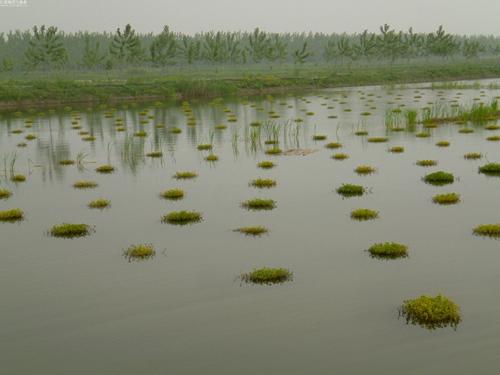 虾稻共作挖塘设计图
